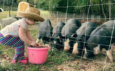 Gillispie's County Line Farm
